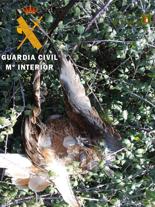 La Guardia Civil ha detenido a una persona por envenenamiento de fauna en peligro de extinción