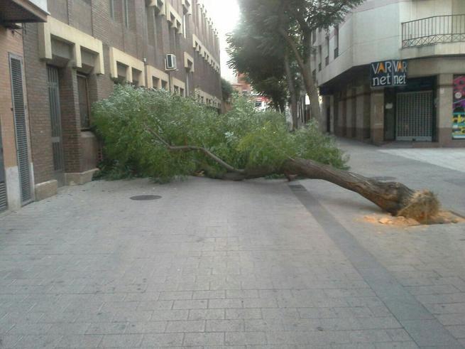 El árbol cubría la calle a todo lo ancho