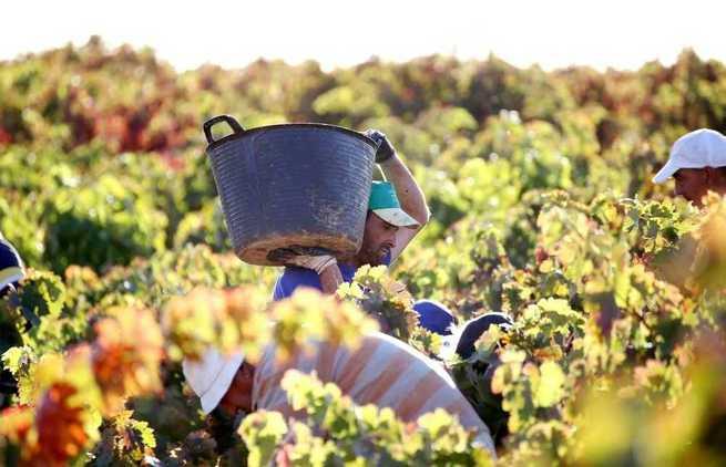 UGT FICA insta a las patronales agrarias a intensificar las evaluaciones de riesgos y a negociar el convenio regional del campo