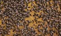 Castilla-La Mancha abona más de 355.000 euros a cincuenta apicultores de Ciudad Real para la mejora de la biodiversidad