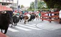 Ganaderos de reses bravas pedirán el sábado en la calle prudencia a los ayuntamientos en la suspensión de festejos