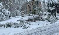 Riesgo extremo en Guadalajara por caídas de árboles en la vía pública y desprendimientos de nieve en fachadas y cornisas