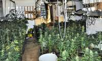 Detenido un matrimonio que ocultaba un cultivo ilegal de marihuana en su segunda vivienda en Puertollano (Ciudad Real)