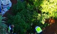 La Policía Nacional desmantela dos plantaciones de marihuana en La Poblachuela y Carrión de Calatrava