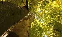 La UNESCO confirma la ampliación del Bien de Patrimonio Mundial 'Hayedos europeos', del que forma parte España, a seis países más