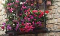Sigüenza busca su rincón florido más bonito