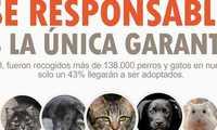 El Ayuntamiento de Socuéllamos lanza una campaña contra el abandono y el maltrato animal