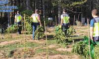 La Policía Nacional desarticula un grupo dedicado al cultivo y distribución de marihuana en el Parque Natural Serranía de Cuenca