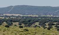Ecologistas en Acción denuncia que la JCCM oculta el expediente de la Mina de Wolframio de Abenójar