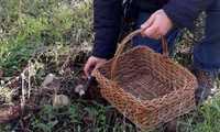 Unas 80 personas participaron en las Jornadas Micológicas de Villarrubia de los Ojos, que encontraron casi 50 especies distintas