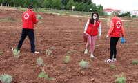 Gran participación en las segundas jornadas de voluntariado ambiental