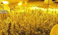La Guardia Civil interviene dos plantaciones de marihuana en dos operativos distintos