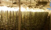 Detienen a dos personas encargadas de un cultivo ilegal de marihuana en el polígono de Olías del Rey