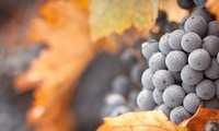 Aprobada la ampliación del rendimiento del viñedo en la Denominación de Origen Valdepeñas