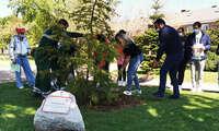 Jóvenes de Azuqueca plantan 400 árboles en la campaña 'Un árbol por Europa'