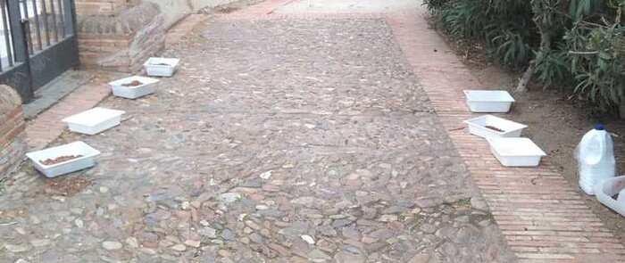 El Ayuntamiento de Toledo desmiente el abandono de colonias felinas