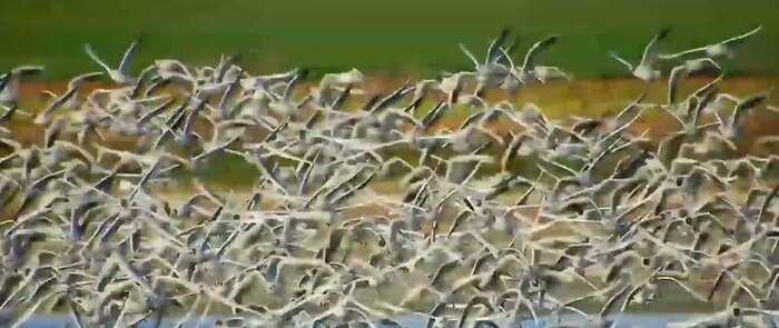 Aves en el Complejo Lagunar de Alcázar de San Juan