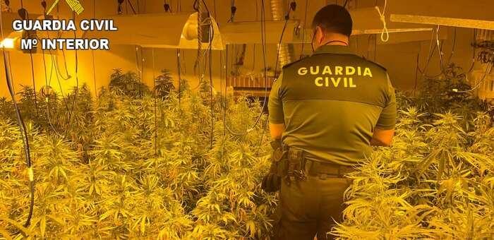 La Guardia Civil ha desmantelado una nueva plantación en San Martín de Pusa (Toledo)