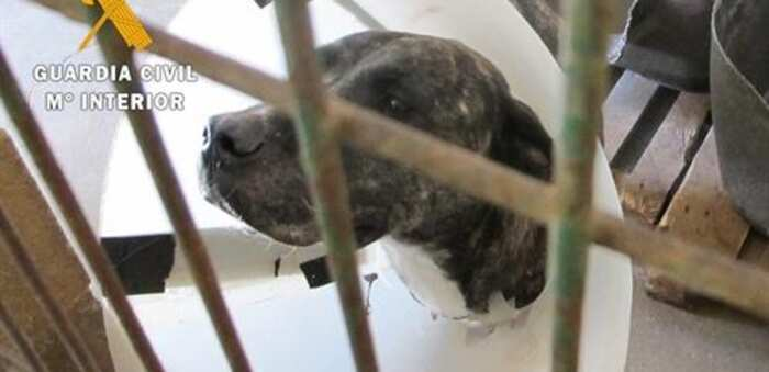 Imputado un residente en Guadalajara por presunto delito de maltrato animal