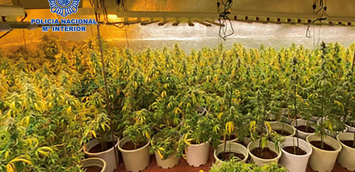 Desmantela una sofisticada plantación de marihuana en Cabanillas del Campo dotada de gran capacidad de producción en Guadalajara