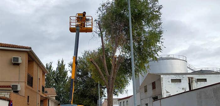 En marcha en Villacañas la campaña anual de poda y terciado de árboles