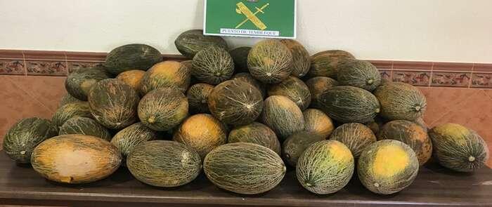 La Guardia Civil investiga a tres personas por un delito de hurto de 20.000 kilos de melones en Tembleque
