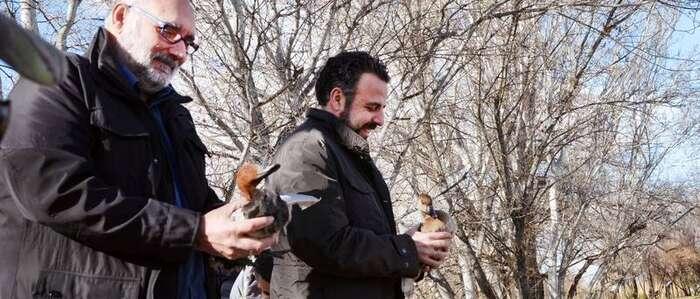 La población de aves de la Reserva Ornitológica de Azuqueca incorpora a una veintena de ejemplares