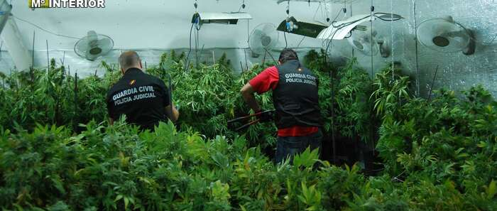 Detenido en El Casar (Guadalajara) por cultivar 3.410 plantas de marihuana en una vivienda unifamiliar