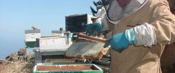 Detenido un matrimonio en Albacete por estafar por Internet la venta de 11.500 kg de fructosa para apicultura