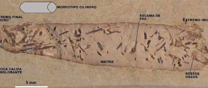 Hallan heces fósiles en Las Hoyas (Cuenca) que permiten conocer la vida en el Cretácico