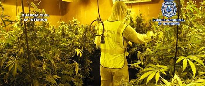 Detenidas dos personas en Seseña y desmantelada una plantación interior de marihuana con 1.256 plantas