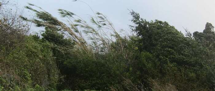 Protección Civil y Emergencias alerta por fuertes vientos en tierra y mar