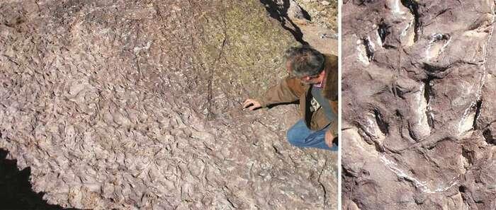Este otoño podría comenzar la musealización de los fósiles del Cretácico descubiertos en Tamajón