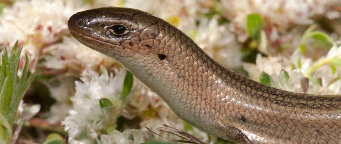 La Diputación de Toledo ofrece un curso sobre anfibios y reptiles de Castilla-La Mancha