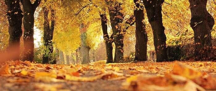 El otoño comienza este domingo a las 3.54 horas y durará 89 días