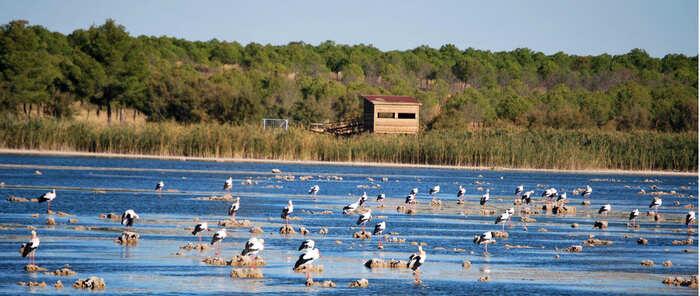 Identificación de plumas, anillamiento y suelta de aves, las actividades del Día Mundial de las Aves en Villafranca