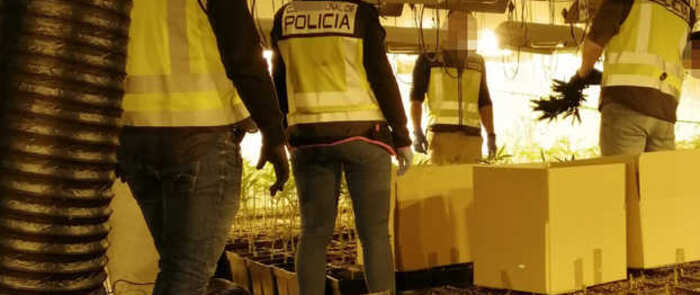 La Policía Nacional desmantela en Cobisa un centro de cultivo de marihuana con capacidad para producir más de 300 kilos de Cannabis