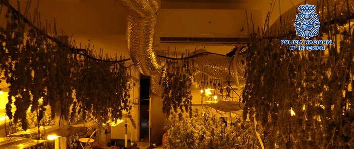 Desmantelado en Burguillos un laboratorio clandestino donde se cultivaba marihuana