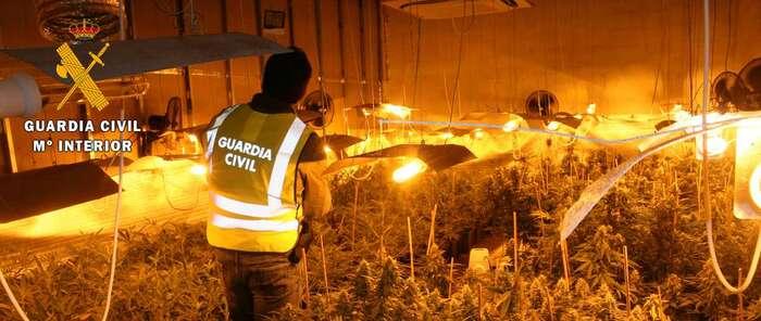 Cuatro personas detenidas e incautación de 1.315 plantas de marihuana en Los Cerralbos