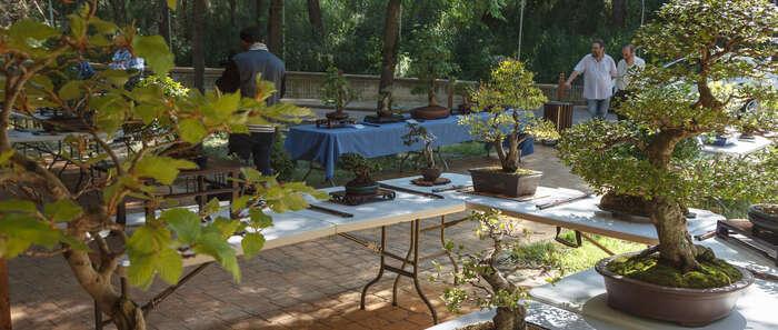 El zoo municipal de Guadalajara acogerá la nueva exposición de bonsais y suisekis