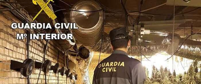 La Guardia Civil incauta cerca de 2.000 plantas de marihuana en Cabanillas del Campo y Torrejón del Rey