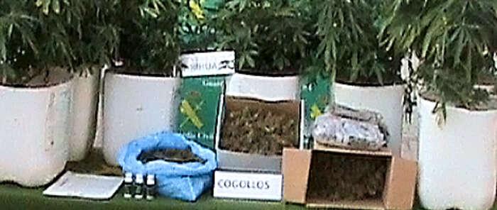La Guardia Civil detiene a dos personas por cultivo de marihuana.