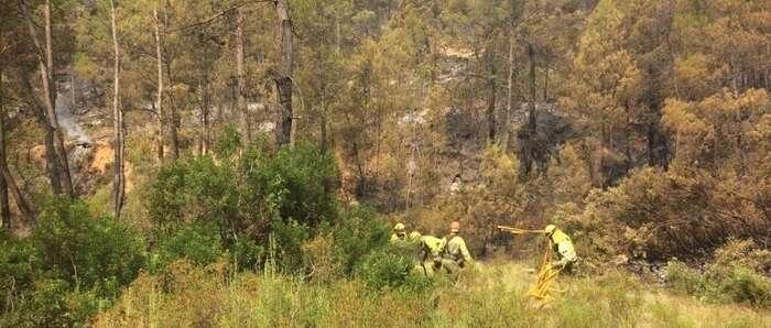 Comienzan los trabajos de restauración de la zona afectada por el incendio de Yeste