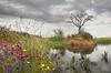 imagen Segundo Premio Primavera en la isla