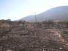 """imagen de Los técnicos valoran los daños causados por el incendio en el Paraje de """"El Bombo"""""""