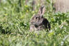 imagen de El IREC estudia cómo afecta la relación entre el conejo y el búho real al crecimiento poblacional de esta ave