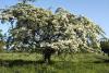 imagen de En Objetivo Natursalud la RCP y el espino blanco