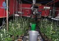 """La Policía Nacional desmantela una red de plantaciones dedicada al cultivo """"indoor"""" de marihuana en Puertollano"""