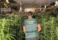 Detenidas tres personas e intervenidas 1.425 plantas de marihuana en un cultivo indoor en Olías del Rey