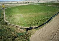 Intervenidas en Huerta de Valdecarábanos 135.000 plantas de marihuana, la mayor cantidad en un mismo cultivo en toda Europa